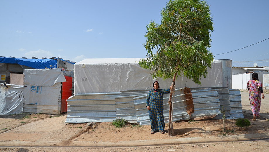 3 year tree, Domiz refugee camp, Iraq